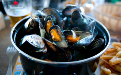Blue mussels, pictured here, are an important food source in Europe.