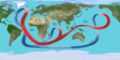 Illustration depicting the circulation of the global ocean. Throughout the Atlantic Ocean, the circulation carries warm waters (red arrows) northward near the surface and cold deep waters (blue arrows) southward.