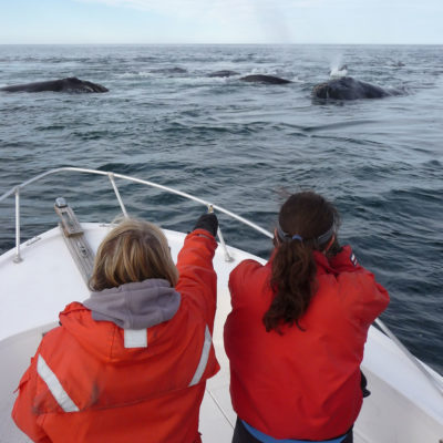 Left: New England Aquarium scientists collect data on right whales in the Bay of Fundy. Right: A whale entangled with fishing line, which can lead to bone damage, infection, and eventually death.
