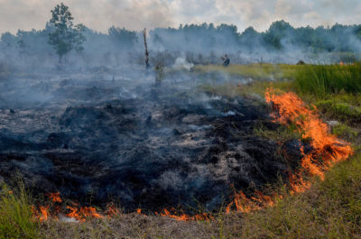 One of 73 fires detected on peatland or in forests early last month that caused haze on the island of Sumatra.
