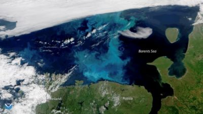 A large phytoplankton bloom [light blue] in the Barents Sea in July 2018, captured by a NOAA satellite. Credit: NOAA