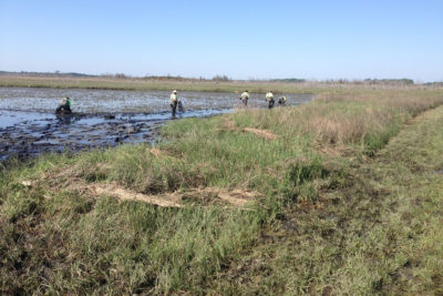 Volunteer workers plant native Spartina grass as part of the restoration effort at the refuge.