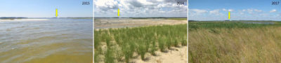 The transformation of an area of Prime Hook from 2015 t0 2017 following dune building and planting of native grasses.