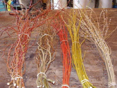 Woody florals such as dogwood and willows can be grown in buffers and marketed to the floral trade.