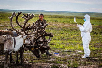 A Russian veterinarian checks reindeer for anthrax in the Yamalo-Nenets Autonomous Okrug of Siberia in 2016.