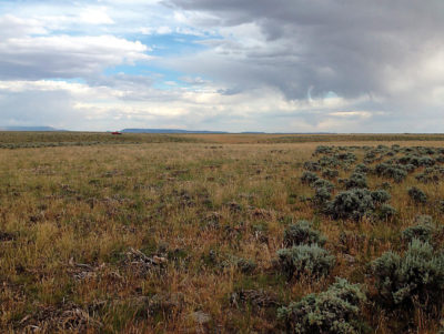 Mowed (left) and unmowed (right) patches of sagebrush in sage grouse habitat in central Wyoming in 2015.