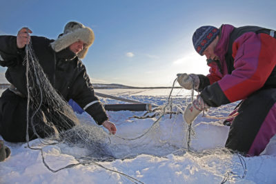 The Skolt Sami people of Finland have documented a local decline in Atlantic salmon and are collaborating with scientists on a project to restore them.