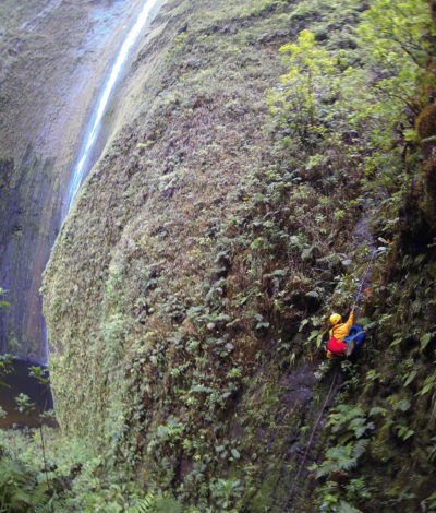 A scientist with the Plant Extinction Prevention Program climbs through remote Hawaiian ecosystems to study endangered plant species.