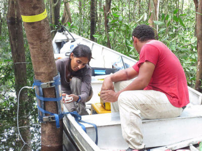 Sunitha Pangala installs a device that measures a tree's methane emissions, in the Amazon.