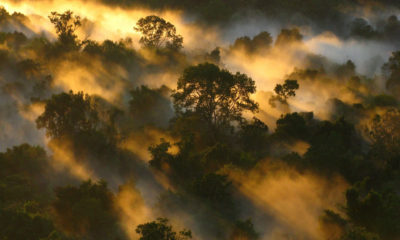 Forest mist in Pico da Neblina National Park, in the northern Brazilian state of Amazonas.