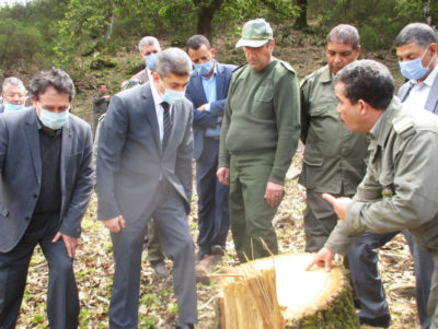 Officials and forest guards examine the stumps of illegally felled Algerian oak trees in Ain Draham, Tunisia in April.