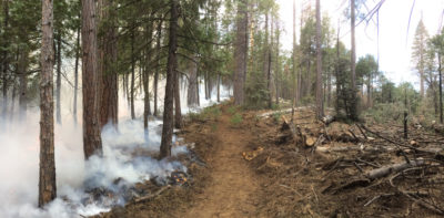 A prescribed burn, intended to clear dead trees that fuel intense wildfires, smolders in Sierra National Forest in May 2018.