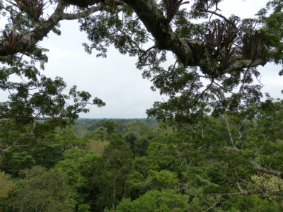 The view from the crown of the ceibo tree that Haskell visited multiple times in the Amazon.