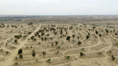 An area in the northern Negev Desert that has been cleared for tree planting.