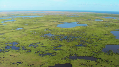 The Mississippi River Delta, which empties into the Gulf of Mexico, contains vast areas of marshes, swamps and barrier islands.