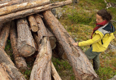 "Malin Sahlin of the Swedish Society for Nature Conservation surveys ""the graveyard,"" a pile of high conservation value trees cut illegally and now left to rot on a clear-cut."
