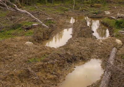 Sweden's forestry industry now operates to keep its mills supplied year-round. A common result is deep tire tracks through forests from logging during wet weather.