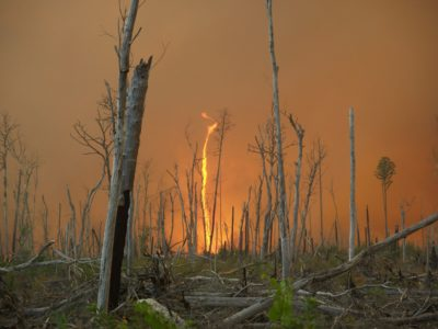 A wildfire in the Great Dismal Swamp National Wildlife Refuge in Virginia, August, 2011.