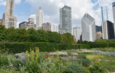 "Lurie Garden in Chicago's Millennium Park is a ""near-native"" representation of prairie habitat."