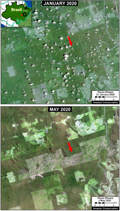 Satellite images show nearly 15,000 acres of new deforestation between January and May in the Brazilian state of Pará.