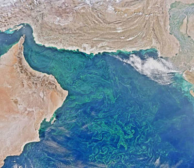A phytoplankton bloom in the Arabian Sea and Gulf of Oman (upper right), pictured in February 2015.