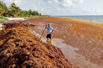 When sargassum collects along coastlines and rots, such as seen here in Cancun in 2015, it gives off a rotten egg odor.