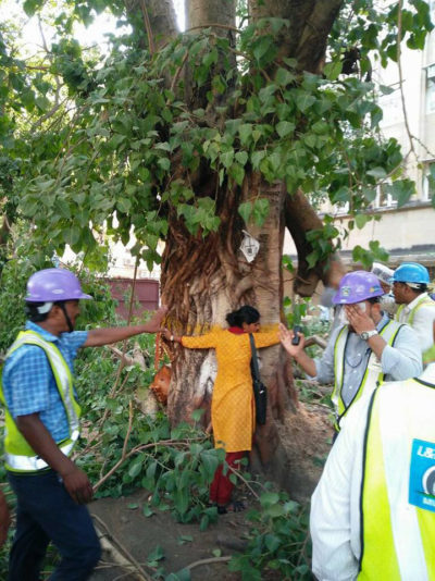 A protester hugs an old tree in Mumbai to prevent it from being cut down for a subway project.