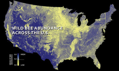 The abundance of wild bees across the U.S. in 2013, with areas of yellow showing where bee populations have declined.