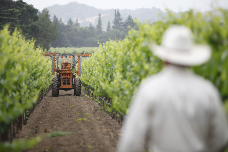 Workers at Hill Family Estate in Napa Valley.