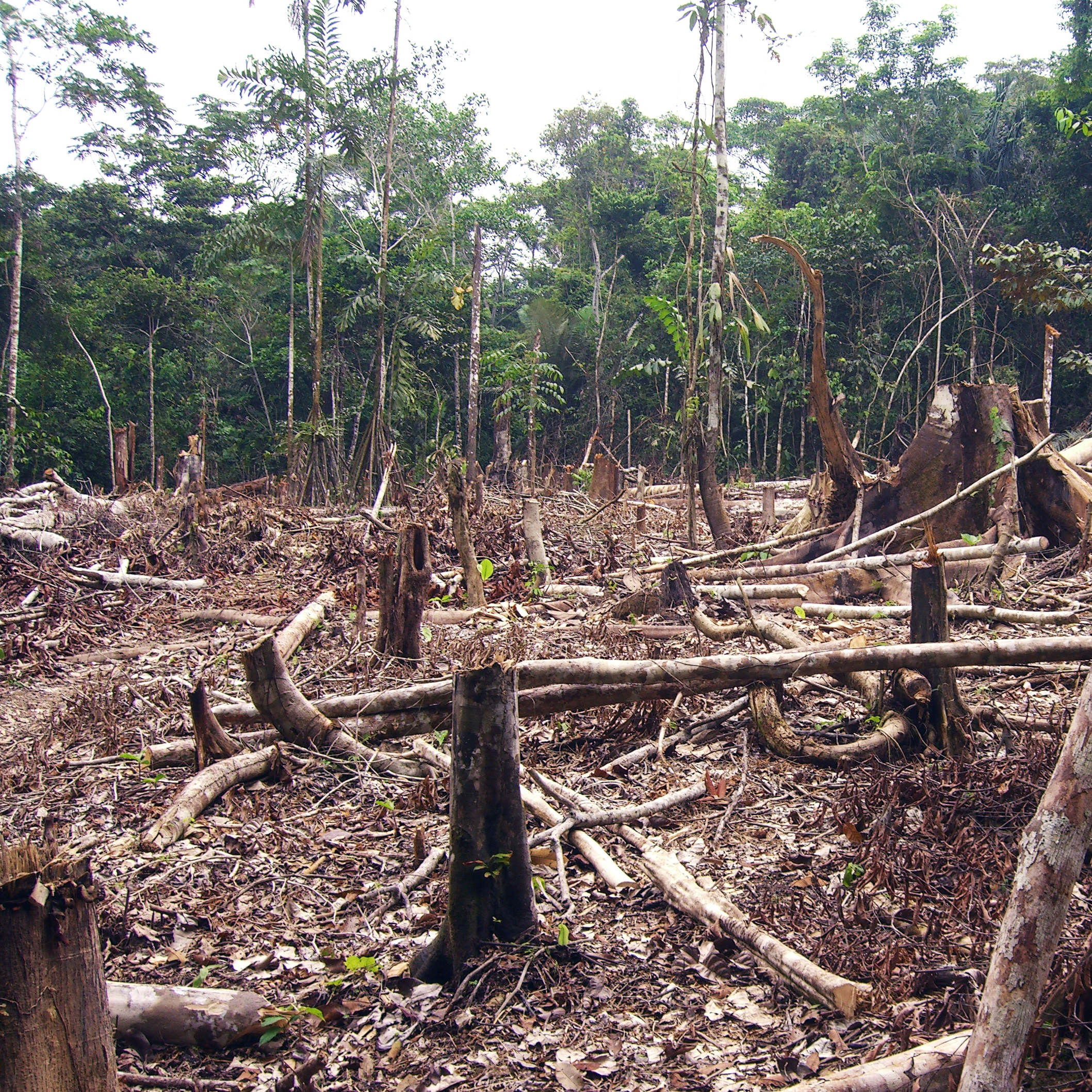 after a decade of decline brazil s deforestation again on the rise