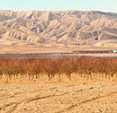 Central-Valley-drought-130.jpg
