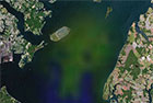 Chesapeake Bay algal bloom