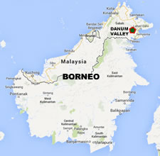 In Imperiled Forests Of Borneo A Rich Tropical Eden Endures Yale E360