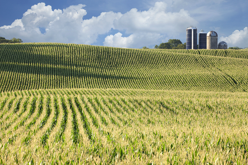 The Case Against More Ethanol It S Simply Bad For Environment