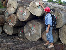 Timber harvesting in East Kalimantan, Indonesia