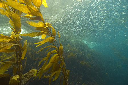 How Growing Sea Plants Can Help Slow Ocean Acidification