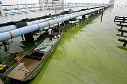 Algae in Lake Taihu