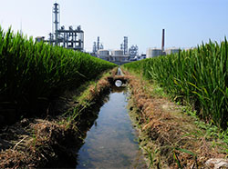 Chemical plant behind rice paddy