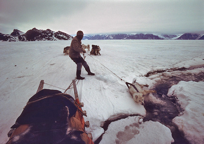 An Inuit Hunter Pulls One Of His Dogs From A Crack In The Ice ED STRUZIK