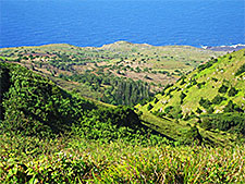 Ascension Island ecosystems