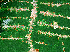 Brazilian Amazon Roads Deforestation