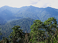 The Hukaung Valley Wildlife Sanctuary in northern Myanmar