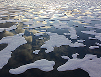 Arctic Sea Ice NASA