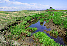 Plum Island Salt Marsh Study Deegan
