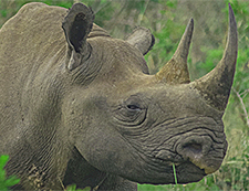 Black Rhino South Africa