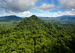 ariel view of sabah forest