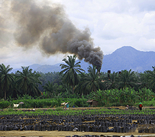 Palm Oil Mill in North Sumatra